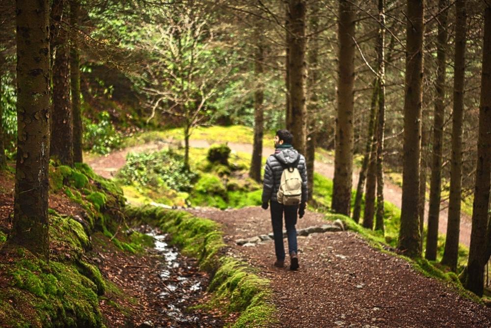 Una vita, un'unica direzione · Ragazzo che cammina in un bosco guardandosi all'intorno