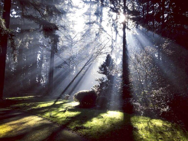 Andrea D'Angelo 2.0 - Raggi di sole tra le conifere