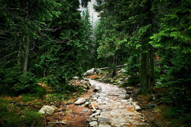 Scrivere preserva la sanità mentale - Sentiero nel bosco
